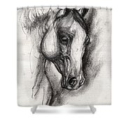Arabian Horse Drawing 12 Shower Curtain