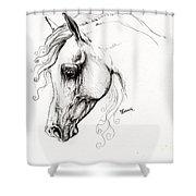 Arabian Horse Drawing 15 Shower Curtain by Angel  Tarantella