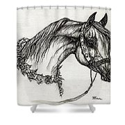 Arabian Horse Drawing 22 Shower Curtain