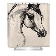 Arabian Horse Drawing 24 Shower Curtain