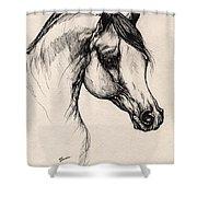 Arabian Horse Drawing 24 Shower Curtain