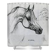 Arabian Horse Drawing 28 Shower Curtain