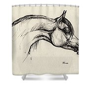 Arabian Horse Drawing 30 Shower Curtain