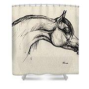 Arabian Horse Drawing 30 Shower Curtain