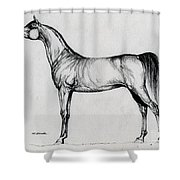Arabian Horse Drawing 34 Shower Curtain