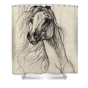 Arabian Horse Drawing 37 Shower Curtain