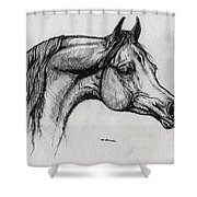 Arabian Horse Drawing 40 Shower Curtain