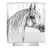 Arabian Horse Drawing 47 Shower Curtain