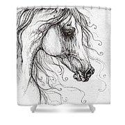 Arabian Horse Drawing 48 Shower Curtain