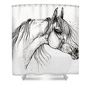 Arabian Horse Drawing 51 Shower Curtain