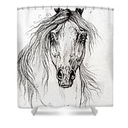 Arabian Horse Drawing 55 Shower Curtain