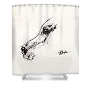 Arabian Horse Sketch 2014 05 24 G Shower Curtain