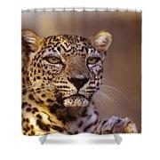 Arabian Leopard Panthera Pardus 1 Shower Curtain
