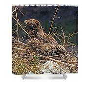 Arabian Leopard Panthera Pardus Cubs Shower Curtain