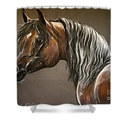 Arabian Mare Shower Curtain