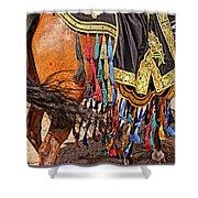 Arabian Native Show Shower Curtain