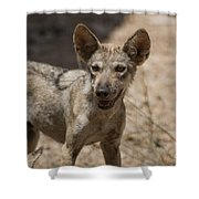 Arabian Wolf Canis Lupus Arabs Shower Curtain
