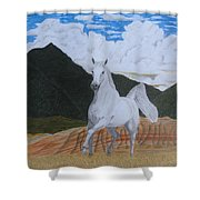 Araboam Stallion 3 Shower Curtain