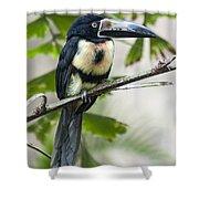 Aracari Shower Curtain