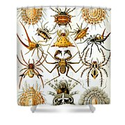 Arachnida Shower Curtain by Georgia Fowler