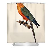 Aratinga Chrysocephalus  Shower Curtain