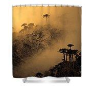 Araucaria Dawn Chile Shower Curtain