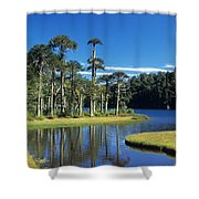 Araucaria Forest Chile Shower Curtain