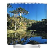 Araucaria Reflections In The Chilean Lake District Shower Curtain