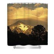 Araucarias At Sunset Shower Curtain