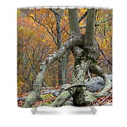 Arboreal Architecture Shower Curtain