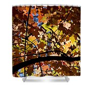 Arboretum Fall Shower Curtain