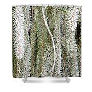 Arboretum Hoar Frost 2 Shower Curtain