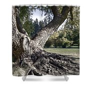Arboretum Tree Shower Curtain by Daniel Hagerman
