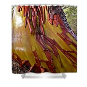 Arbutus Tree Trunk Shower Curtain