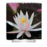 Arc-en-ciel Water Lily Shower Curtain