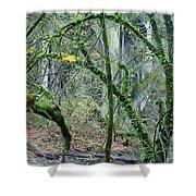 Arch  Bridge Through Trees Shower Curtain