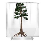 Archaeopteris Prehistoric Tree Shower Curtain
