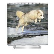 Arctic Fox Jumping Shower Curtain