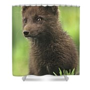 Arctic Fox Portrait Alaska Wildlife Shower Curtain