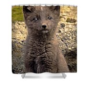 Arctic Fox Pup Alaska Wildlife Shower Curtain