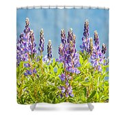 Arctic Lupine Shower Curtain
