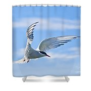 Arctic Tern Sterna Paradisaea In Flight Shower Curtain