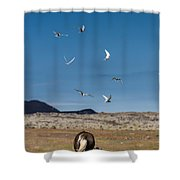 Arctic Terns With Mare And Foal Shower Curtain