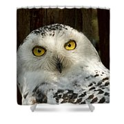 Arctic Visitor Shower Curtain