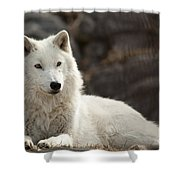 Arctic Wolf Adult Shower Curtain