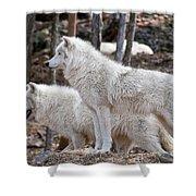 Arctic Wolf Pair Shower Curtain