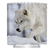 Arctic Wolf Pictures 1054 Shower Curtain