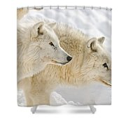 Arctic Wolf Pictures 1081 Shower Curtain