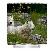 Arctic Wolf Pictures 1128 Shower Curtain