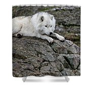 Arctic Wolf Pictures 1142 Shower Curtain